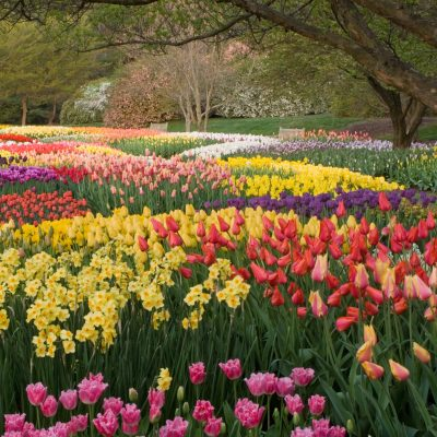Celebrate Spring in Brandywine Valley with Four Botanical Adventures